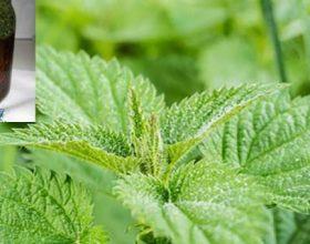 Si të bëni vetë vajin e hithrës, ilaçin më të mirë natyral për 1001 probleme!