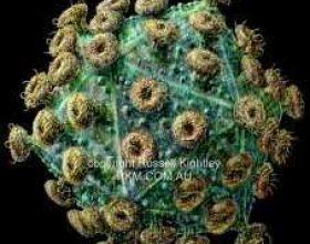 Shkencëtarët danez afër gjetjes së ilaçit kundër virusit HIV
