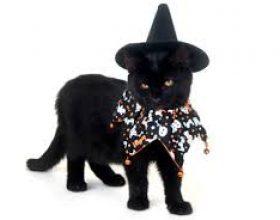 """""""Macet e zeza dhe fatkeqësia që ato sjellin"""""""