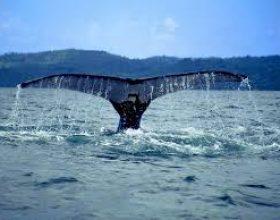 Lutja e Dhenunit, me të cilën ai iu lut Allahut kur ishte në barkun e balenës