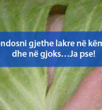 Vendosni gjethe lakre në këmbë dhe në gjoks…Ja pse!