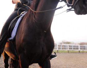 Kalërimi, përdorimi i harkut, mundja dhe vrapi janë sporte që shërbejnë për të gjithë trupin