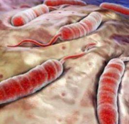 4 ushqime që janë provuar se shkaktojnë kancer, sipas onkologëve!