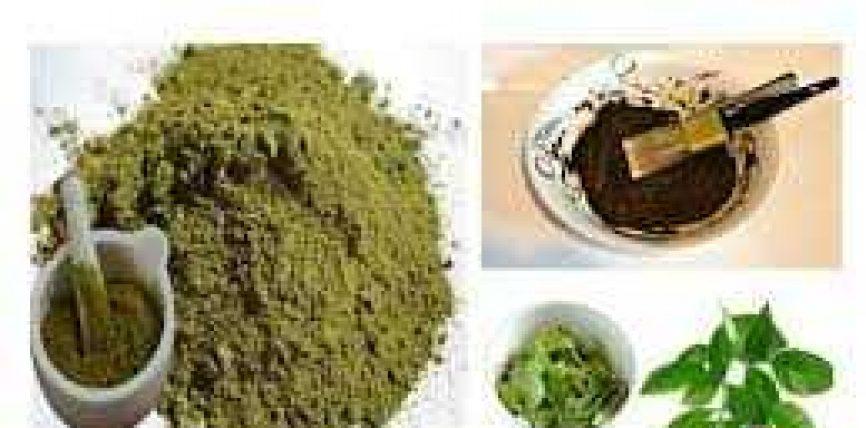 Druri i kënasë (El-Hinna; Al-khanna; Lawsonia inermis)