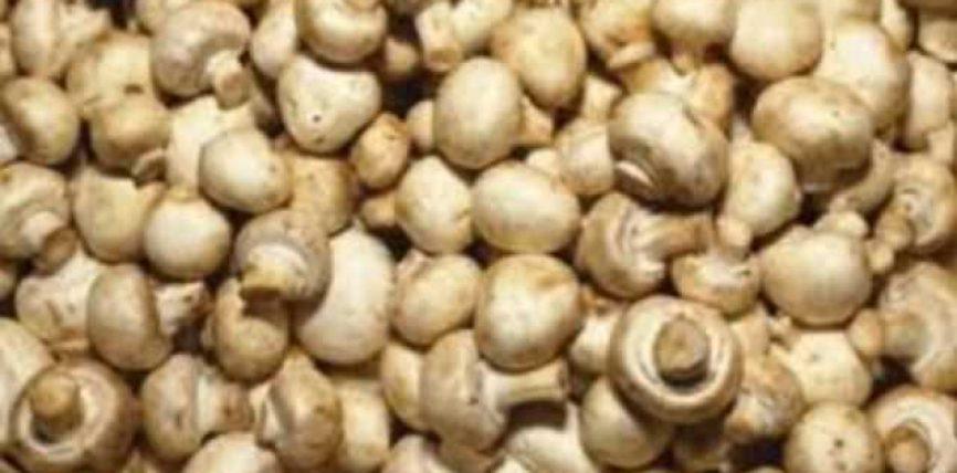 Studim – Kërpudhat, burim të vitaminës D