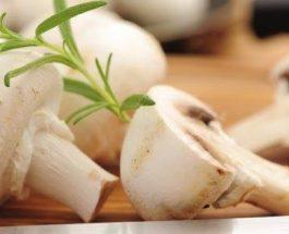 Kërpudhat të nevojshme për ditë të sotit