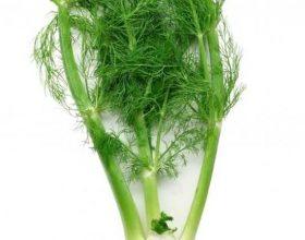 Koprën mund t'a përdorni si sallate, në gjellëra apo si caj