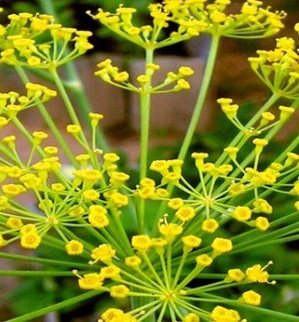 Bimët mjekësore që përdoren për mjekim