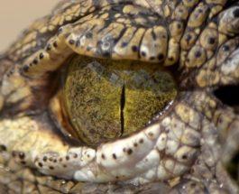Kuriozitete per floket e njeriut,gjuhet e botes dhe lotet e krokodilit