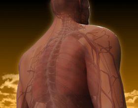 Lodhje e sistemit nervor? Ja zgjidhjet