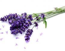 Aroma e livandës qetëson trupin dhe mendjen