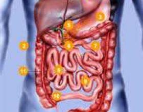 Dieta – Ushqimi i shëndetshëm