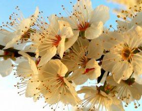 Dhjetë lule për jetë më të mirë