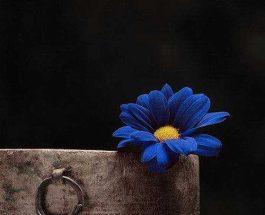 Besimi, lulja e jetës