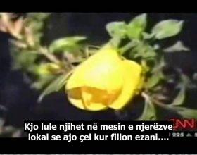 Lulja qe çel kur thirret ezani