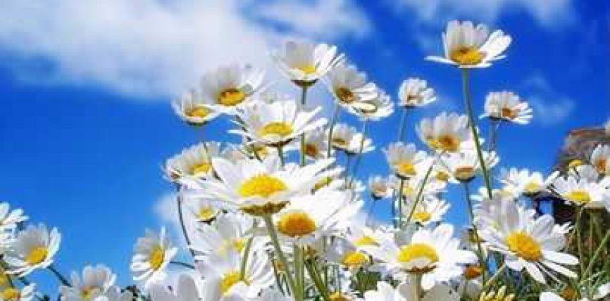 Pranvera dhe alergjite