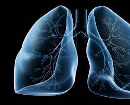 Mushkëria, organi delikat që lidhet me qarkullimin ajror