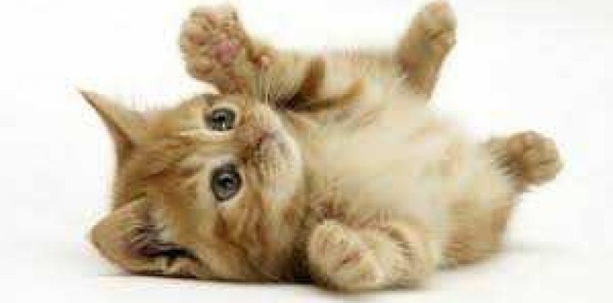 Macat dhe mbajtja e tyre … !!