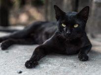 """Si të kuptojme """"miaou"""" e një maceje?"""