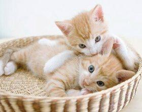 Macet parandiejnë termetet !