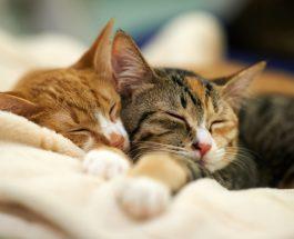 Fuqia mahnitëse shëruese e maceve !??