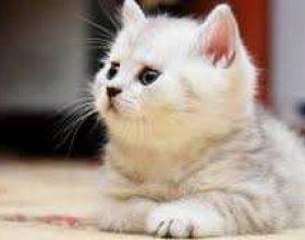 Kujdesi për macën,shkak i shërimit të nënës sime