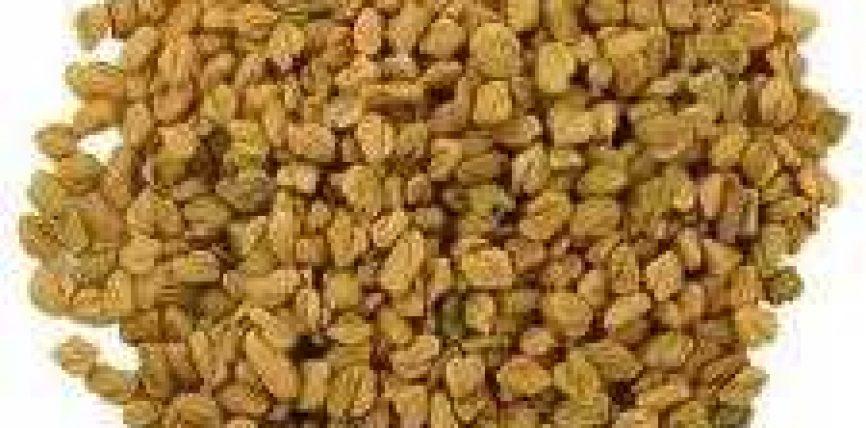 Makthi, çiçibanozi,sanëz (Trigonella foenum-graecum; Arab. hulba)
