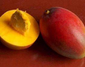 Fakte te mahnitshme per mangon