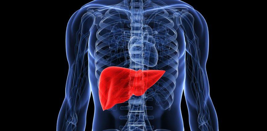 Mëlçia, këshilla dhe njohuri të përgjithshme