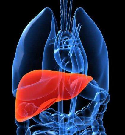 Mëlçia, ushqimi dhe shërimi me barerat popullore !?