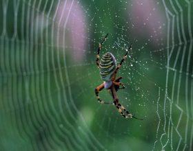 Një studim shkencor mbi ajetet e marimangës