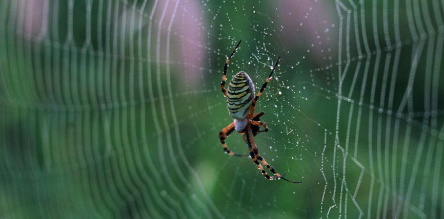 Helmi i merimangës vdekjeprurëse shpëton jetë
