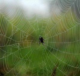 Helmi i merimangës mund të përdoret për trajtimin e paralizës