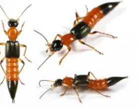 """""""Nje milingone kafshoi njërin nga Profetet dhe ai urdheroi qe te gjitha foletë e milingonave te digjeshin. Por …"""
