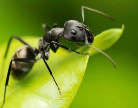 Si u suspendua nga puna milingona e vyeshme?