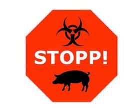 Sëmundjet që fitohen nga mishi i derrit !?