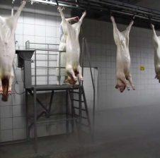 Sëmundjet që fitohen nga mishi i derrit