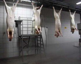 Dëmet nga mishi i derrit