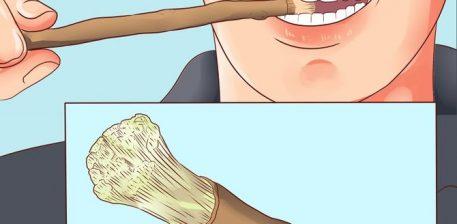 Misvaku është një bimë natyrale që shërben për larjen e dhëmbëve