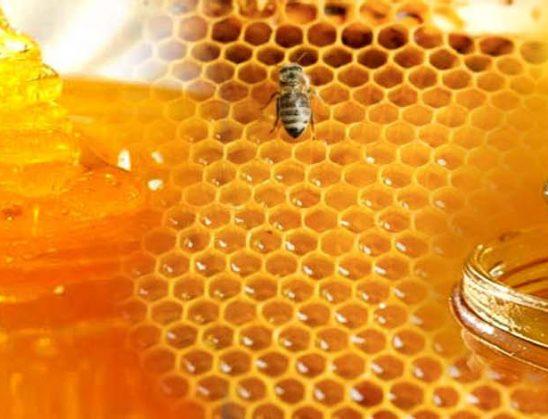 Shërimi me mjaltë dhe qumësht
