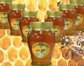 10 Dobite e mjaltit te sidrit