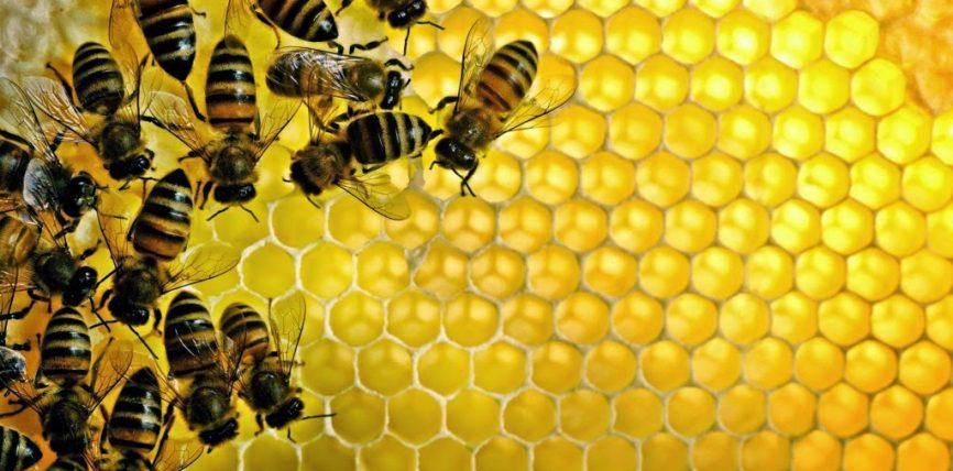 Mjalti dhe dylli
