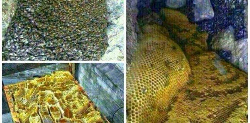 """Jemen: Në një zonë malore zbulohen """"lumenj me mjaltë"""""""