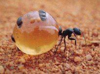 Termitet – insekte të vogla, të ngjashme me milingonat