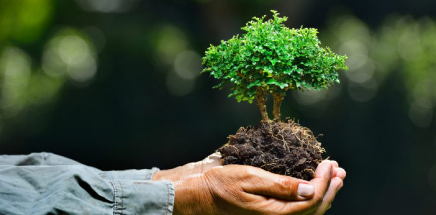 Mjedisi dhe mbrojtja e tij në vështrimin islam
