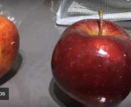 Bëni kujdes nga kjo lloj molle, mund të bëhet burim sëmundjeje