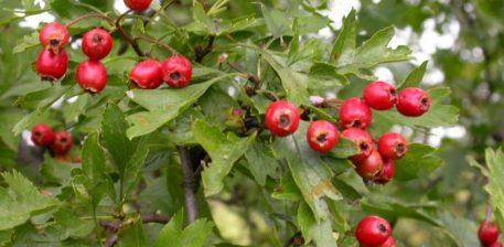 Bimët mjekësore, frutat e perimet që shërojnë të gjitha sëmundjet