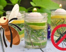 Si të përgatisni në shtëpi ilaçin natyral jo toksik kundër mushkonjave
