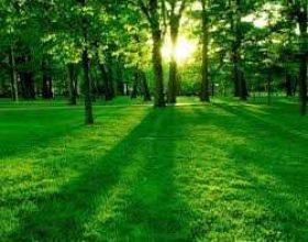 Nëse dëshiron për çdo fjalë të posedosh një pemë në xhennet thuaj