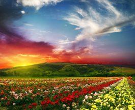 Recitim i mrekullueshëm – Qetëso zemrën me Kur'an!